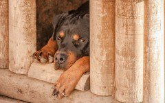 Selecting the best dog house for your Dog