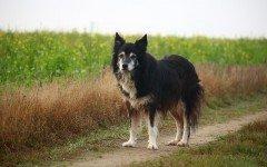 Malattie della colonna vertebrale del cane