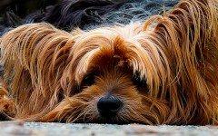 Mi perro tiene diarrea : recomendaciones