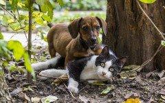 Le malattie respiratorie cane e gatto: quali sono?