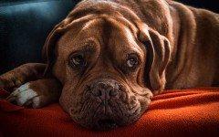 Alimentazione del cane allergico i rischi e gli alimenti da evitare