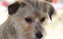 Depressione del cane: i segnali e i sintomi