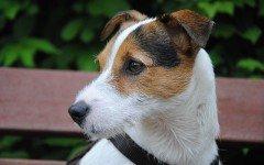 Le malattie renali nel cane: quali sono e i sintomi