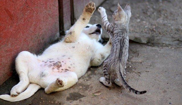 giochi per animali fai da te come realizzarli in casa On animali da casa