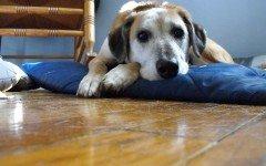 Tengo un perro triste: causas y soluciones para este problema