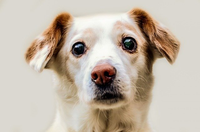 Mi perro tiembla: causas y informaciones