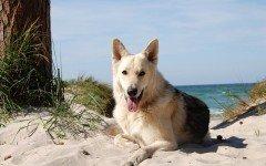 Vacanza con il cane: spiagge per cani Riccione