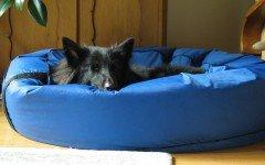 Cucce per cani da interno: rigide o morbide?