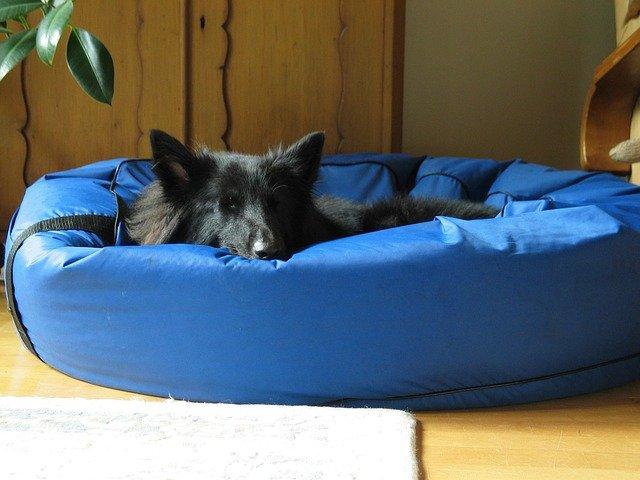 Cucce per cani da interno rigide o morbide dogalize for Cucce da interno per cani taglia grande