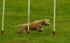 Alimentazione cane sportivo: tutte le indicazioni