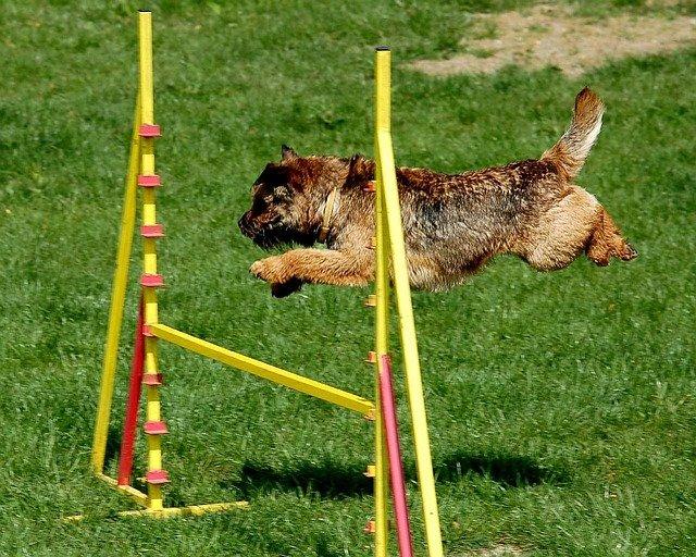 Giochi per cani agility: percorso ad ostacoli e corda