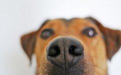 Los perros de caza mas conocidos