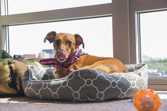Como hacer una cama para perros Instrucciones!