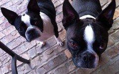 Le malattie della pelle del cane: le più frequenti e pericolose
