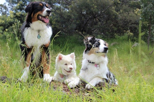Types of Dogs: groups of dogs and characteristics