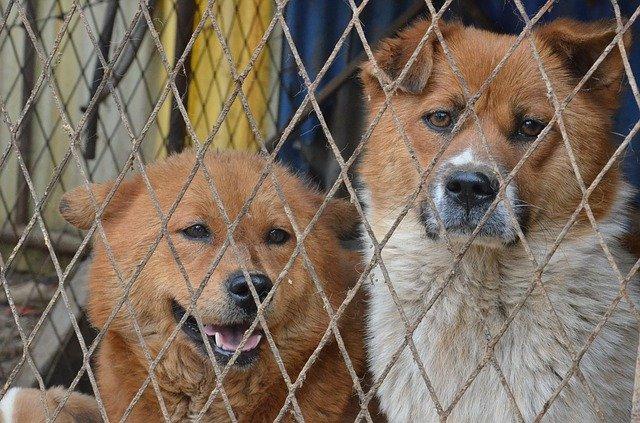 Francia: cani in pessime condizioni in un appartamento