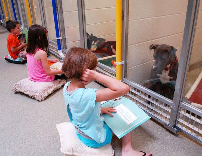Fiabe in canile: il progetto per ridurre lo stress dei cani