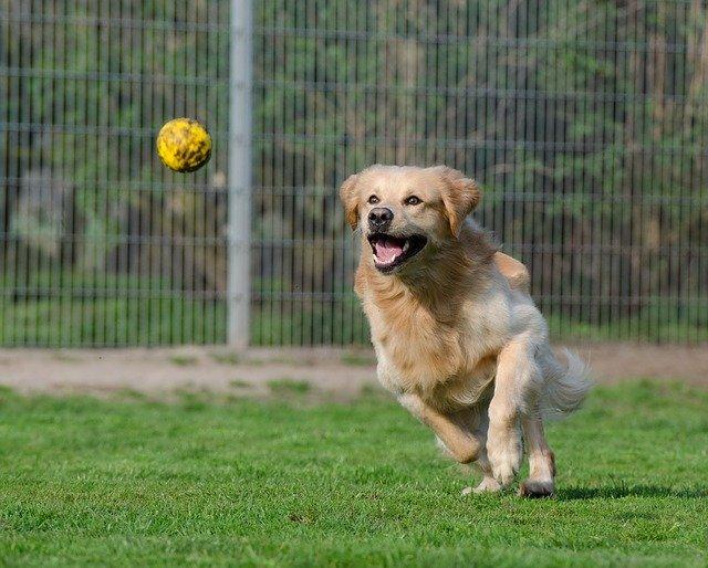 Intelligenza cani: misura le sue capacità con il test di Dogalize