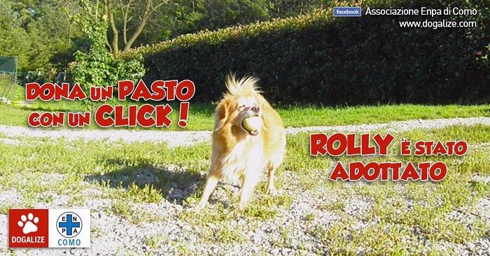 Adottato a distanza Rolly, dell'associazione Enpa di Como