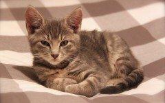 Crocchette per gatti? Un Piano nutrizionale integrato