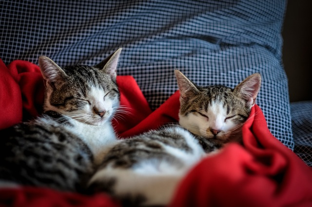 Amazing cat story: a cat adopts a homeless kitten, and they become father and son! Read this and other amazing stories in Dogalize