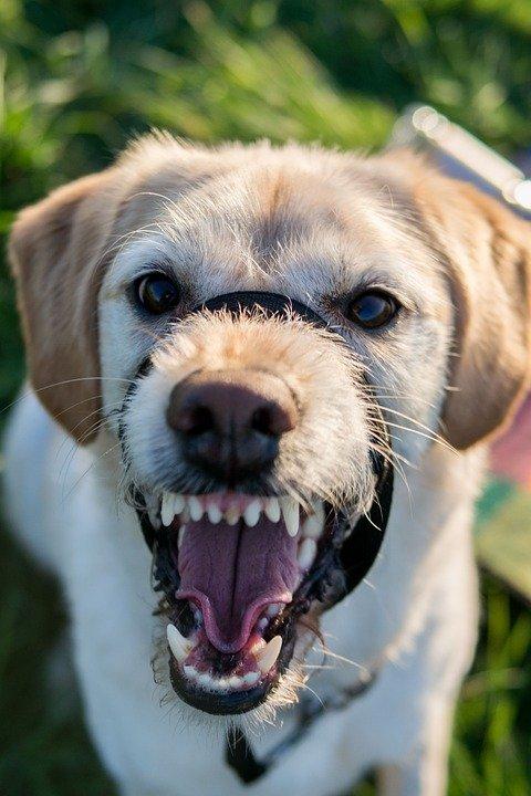 Bozal para perros: qué hacer y qué hay que saber