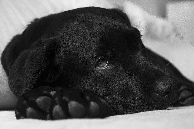 Malattie del cane tumori e sintomi delle patologie