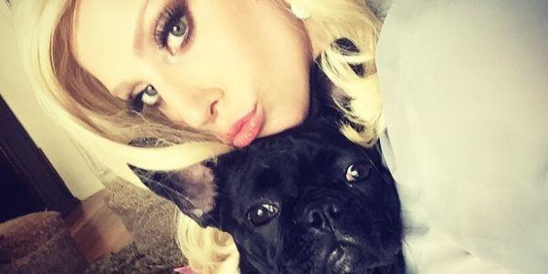 Bulldog francese: la razza del cane di Lady Gaga