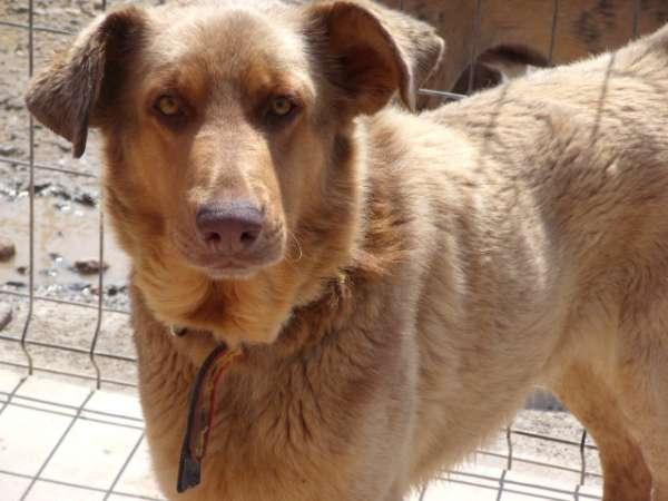 Adopcion de perros: Una ayuda para Julio