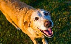 Perro viejo: ¿cómo cuidar un perro anciano?