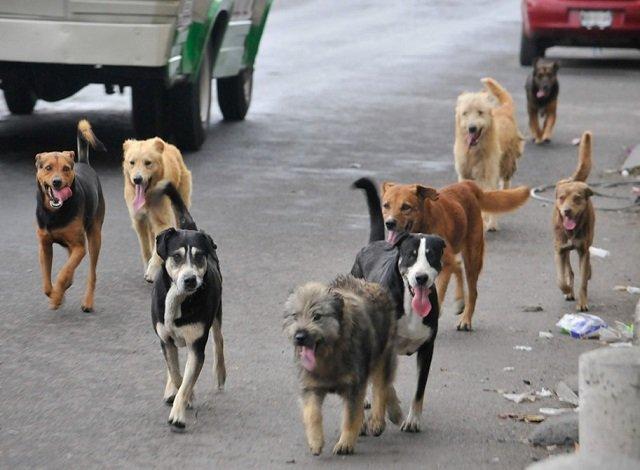En Colombia comienza el primer censo para perros