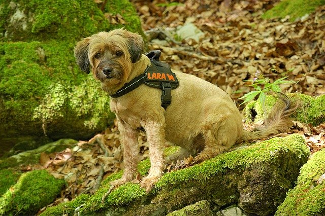 A dog harness is an option for the dog collar that has the benefit of avoiding any consequence to the dog´s throat. They also offer better pet control.