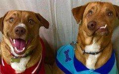 Pablo y Picasso, los perros que conquistaron a Internet