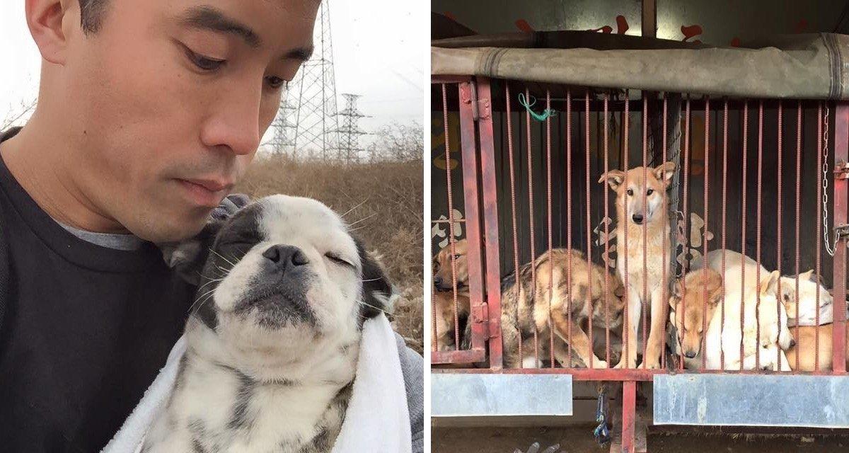 Festival de Yulin: Hombre arriesga su vida y salva 1000 perros