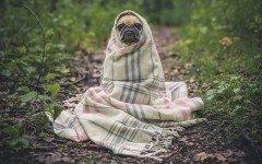 Malattie del cane tremori: quali sono e come intervenire