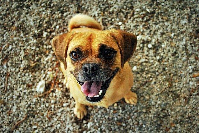 Alimentazione del cane sterilizzato: la dieta ideale