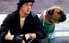 Bullmastiff, la razza del cane di Rocky Balboa