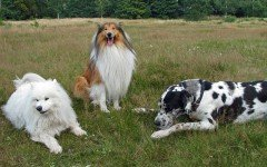 Are you planning on getting a Large Dog Breed?