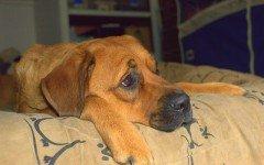 Giochi per cani annoiati: qualche idea anti noia