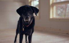 Le malattie del cane vecchio: quali sono le principali