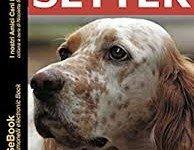 Setter: la recensione del libro di Giancarlo Nazari