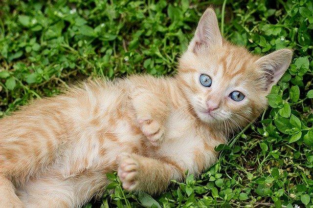 Graffio di gatto: cosa fare e come intervenire