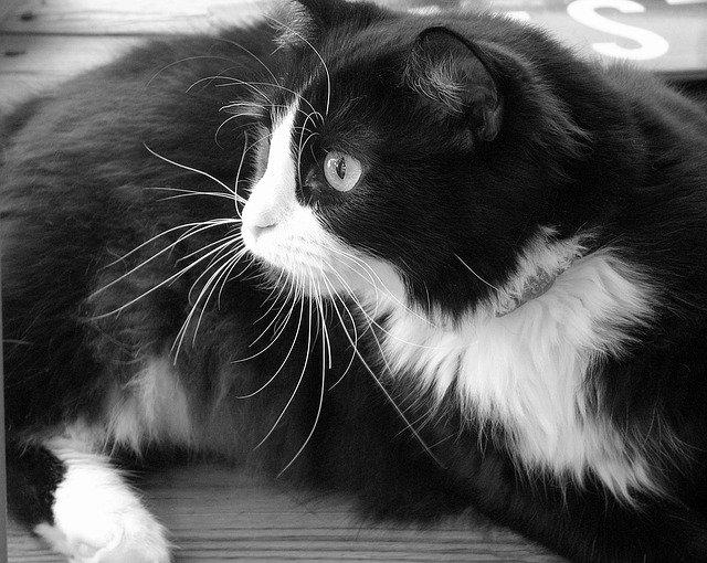 Collare antipulci gatto, come e quanto usarlo