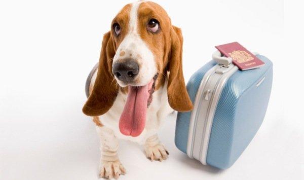 Viajar con perro: como viajar con un perro