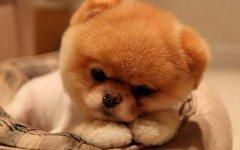 ¿Quien es el perro mas bonito del mundo?