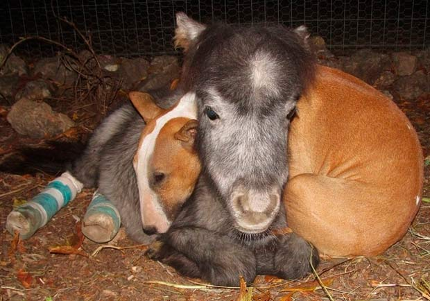 Amistad perro pony: una Sorprendente y tierna amistad