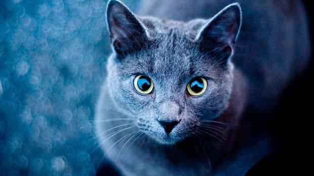 El gato que esta triste y azul: historia y cancion
