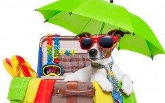 Vacaciones con perro: consejos para viajar con tu mascota
