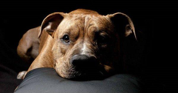 Como ayudar tu perro a superar luto por muerte de compañero