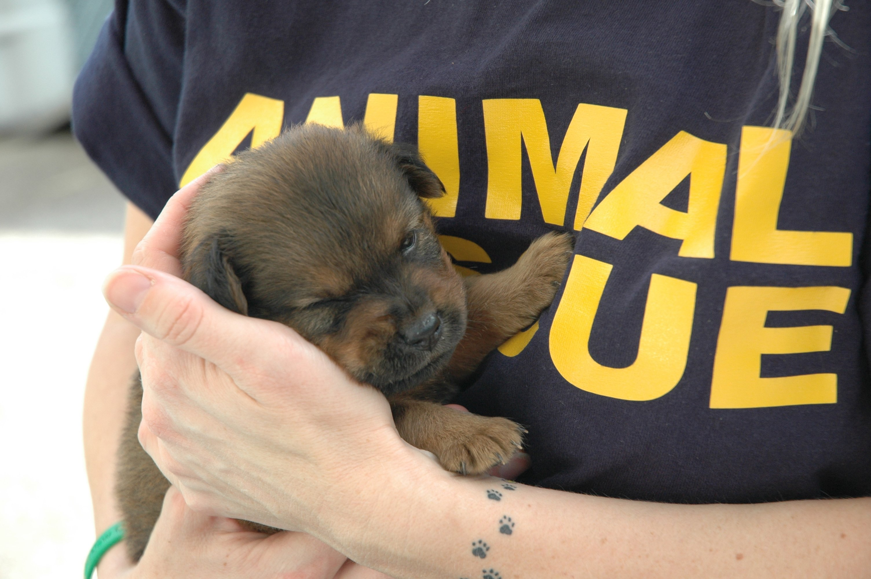 There are many ways to care for and rescue dogs. If you cannot have one at home forever, you can foster a dog or sponsor one while he is in a shelter.
